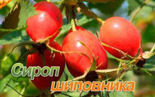 Полезные свойства и противопоказания сиропа шиповника